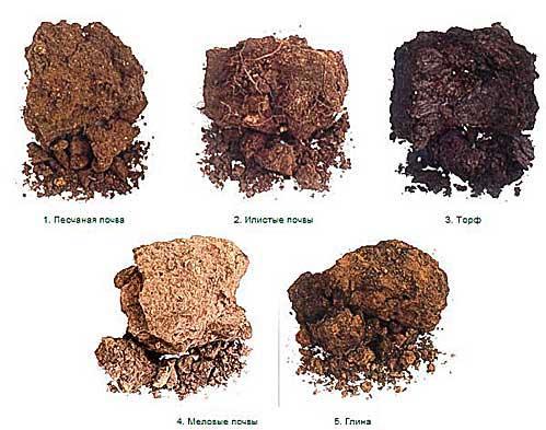 Наиболее распространенные в России виды грунта