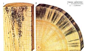 Пораженная грибком древесина